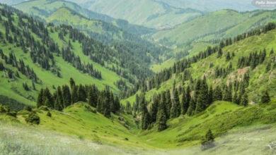 Photo of Іле Алатауы ұлттық паркіндегі жер сатылмайды – Ерлан Нысанбаев