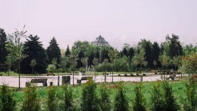 Photo of Алматы ботаникалық бағына кіру ақылы болады