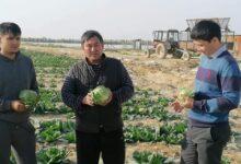 Photo of Жетісайлық диқандар қырыққабаттың алғашқы өнімін экспорттады
