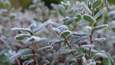 Photo of Майские заморозки ожидаются в Казахстане